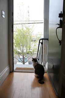 Io, door and tree