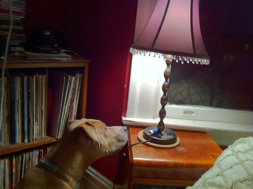 Dog-light